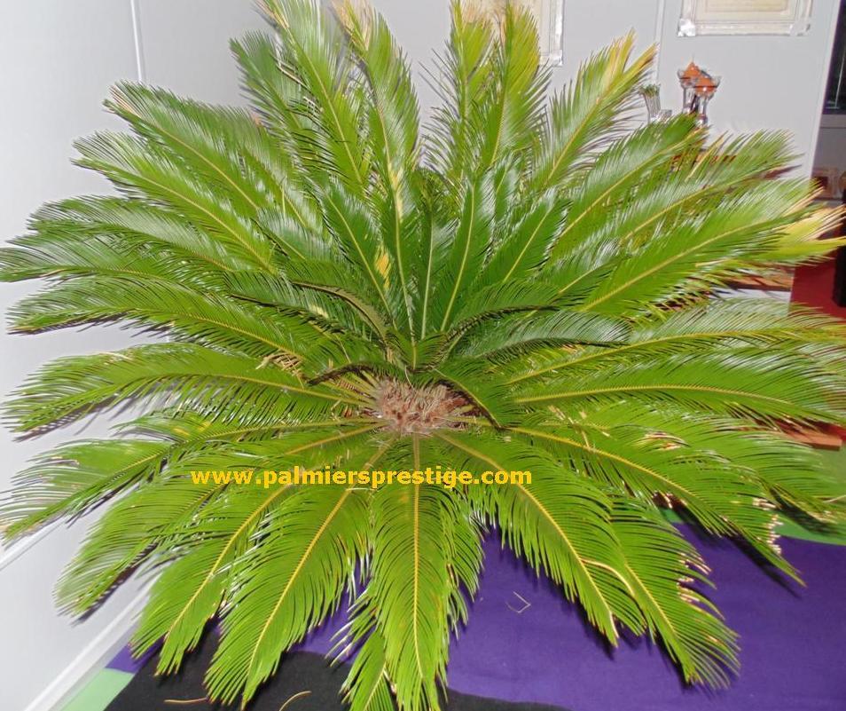 plante en ligne pas cher fausse plante verte pas cher. Black Bedroom Furniture Sets. Home Design Ideas